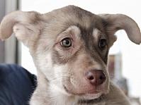 Собака из приюта
